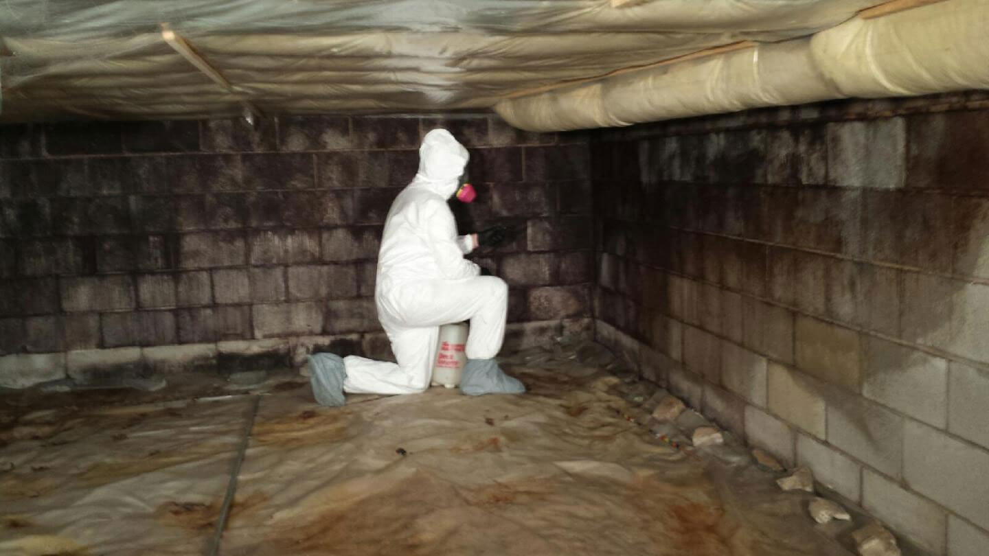 Remediating mold in a crawl space.